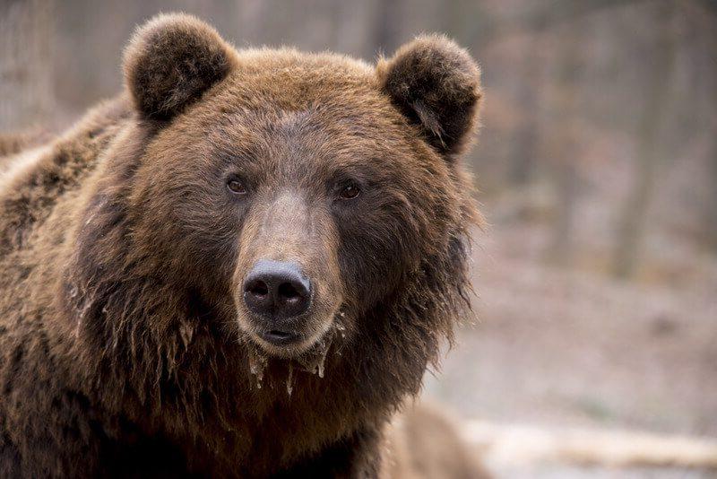 Medve borsodban és a keresőoptimalizálás
